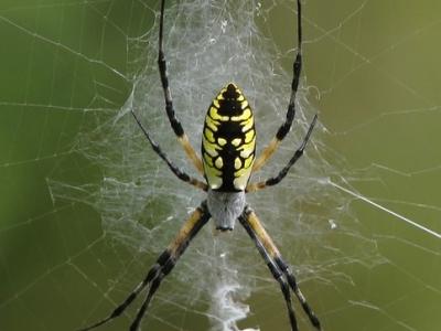 Чем полезны пауки во всем мире ?