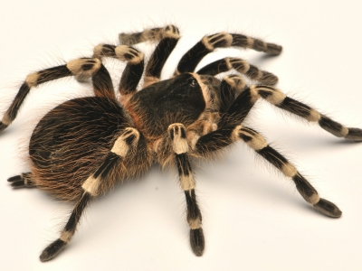 Продажа пауков