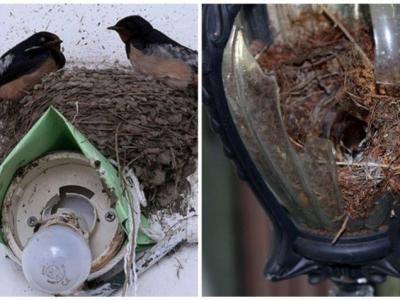 Птички те еще строители