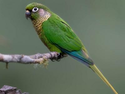 Невероятные птички Бразилии